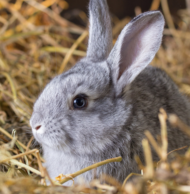 HOW TO CHOOSE THE IDEAL RABBIT OR RODENT BEDDING FOR YOUR PET