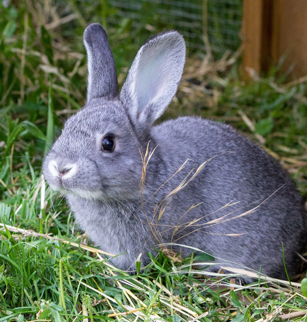 DOS AND DON'TS FOR LETTING YOUR RABBITS ON THE LAWN