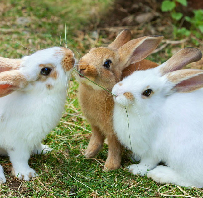 TIPS AND FACTS ABOUT RABBITS