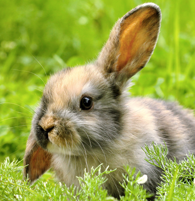 WHAT ARE THE FIVE MOST POPULAR RABBIT BREEDS AND WHAT TO KNOW ABOUT THEM?