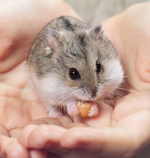 FIVE TIPS TO TAKE GOOD CARE OF YOUR HAMSTER AND KEEP IT HAPPY
