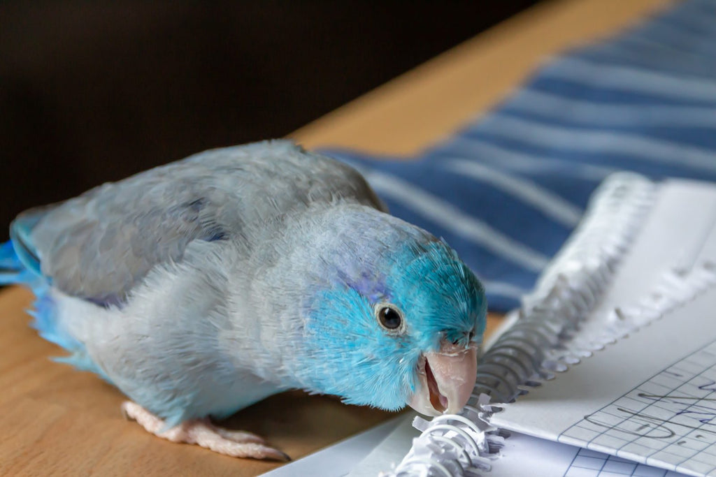 25 WAYS TO KEEP YOUR PARROT ENTERTAINED