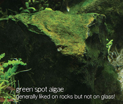 Algae you might encounter