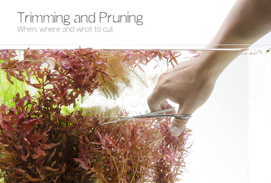 Trimming and Pruning aquatic plants