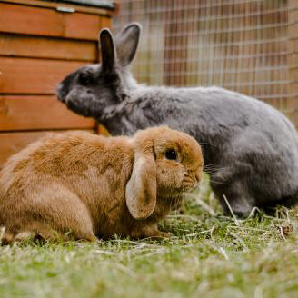 Animal Guide: Rabbits