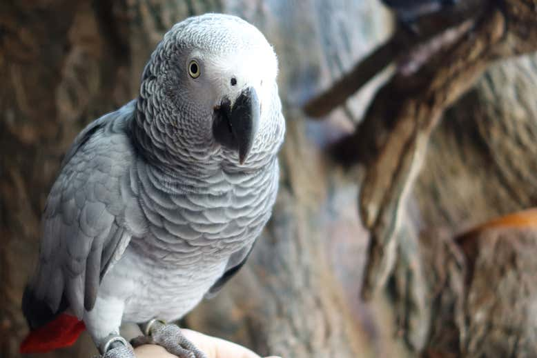 10 TIPS TO TEACH YOUR PARROT TO TALK