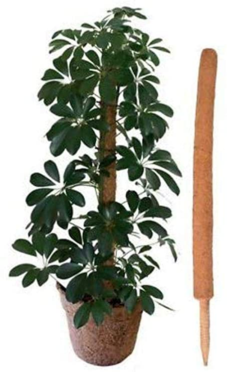 Coco Fibre Growing Pole (90cm)
