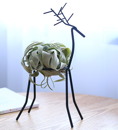 TERRA POTS Air Plant Holder (Deer Stand)