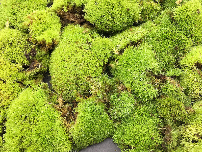 Moss (Type A / Tub)
