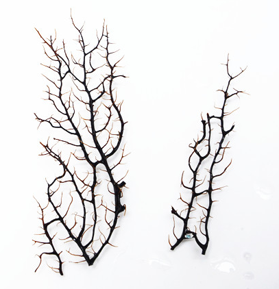 MIUS Opae Ula Sea Fan (~10x10cm)