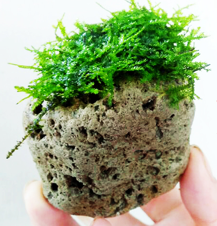 BORNEOWILD Floating Stone L (1pc / 9-12cm)