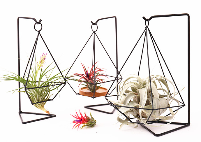 TERRA POTS Metal Air Plant Stand (Hexagon)