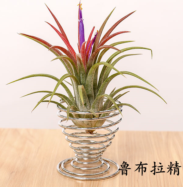TERRA POTS Air Plant Holder (Metal Ring / Silver)