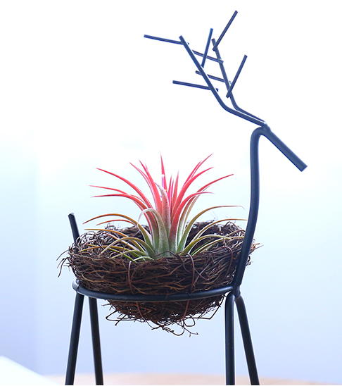 TERRA POTS Air Plant Holder (Deer Stand / with Nest)
