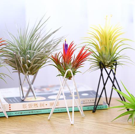 TERRA POTS Air Plant Holder (Tri Stand / Black / 7x9.5cm)