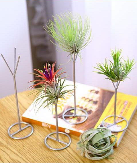 TERRA POTS Air Plant Holder (Trident Stand / L / 6x21cm)