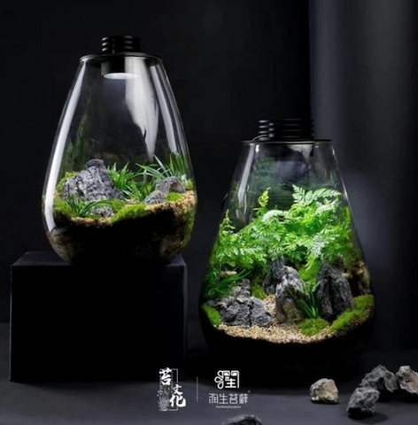 Glass Jars w LED