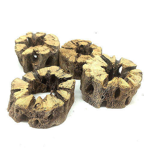BorneoWild Cactus Wood Coin (2pc)