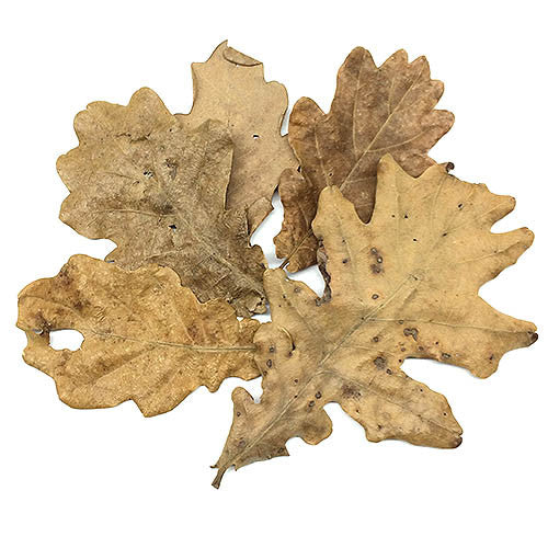 BorneoWild Oak Leaves