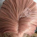 celebrity rose gold pink orange lace front cosplay or everyday use wig can be style many ways