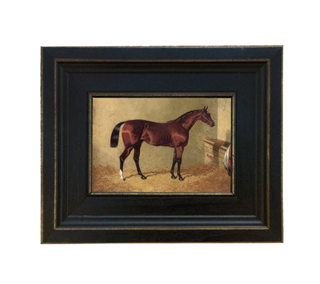 Bay Colt Framed Print