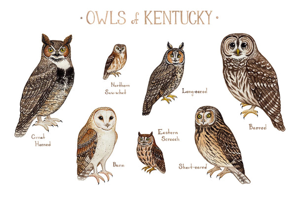 Owls Field Guide Art Print: Kentucky
