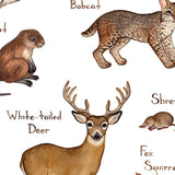 Mammals Field Guide Art Print: Kentucky