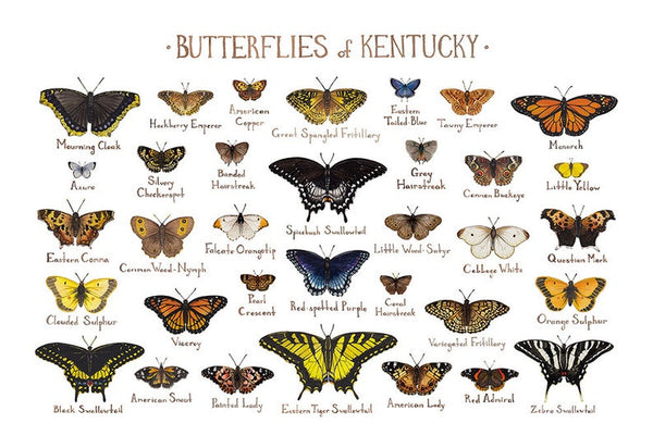 Butterflies Field Guide Art Print: Kentucky