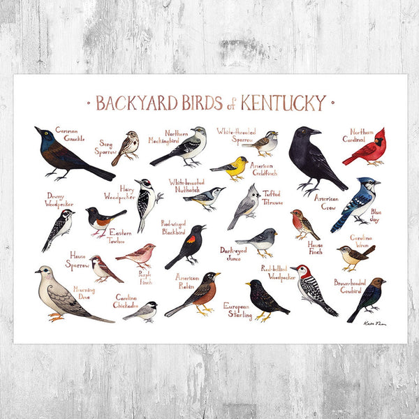 Backyard Birds Field Guide Art Print: Kentucky