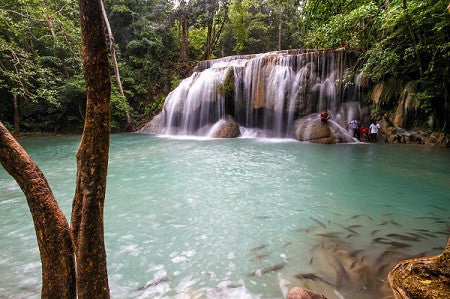 collections/tropical-waterfall-feature.jpg