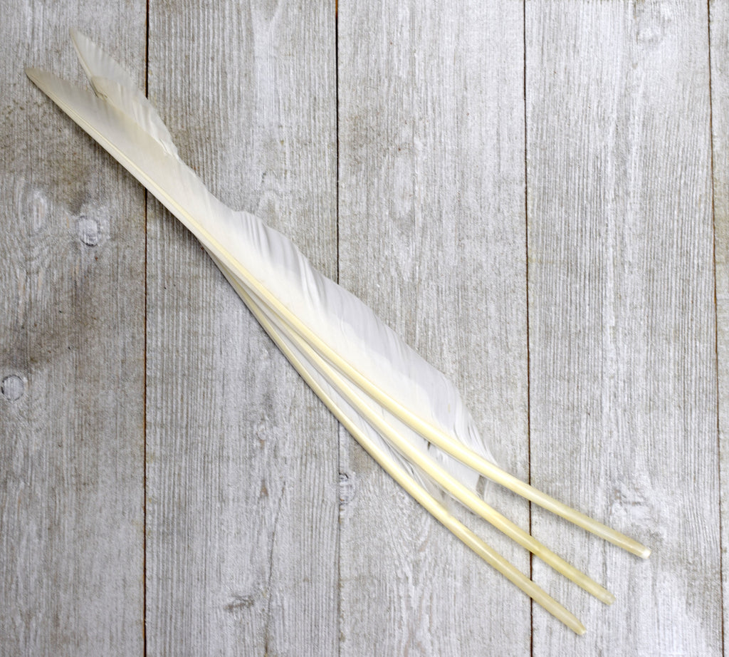 Goose Pointer Feathers for Quills