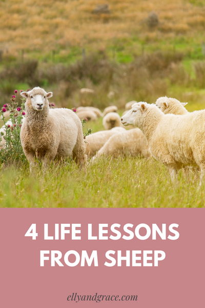 4 Life Lessons From Sheep