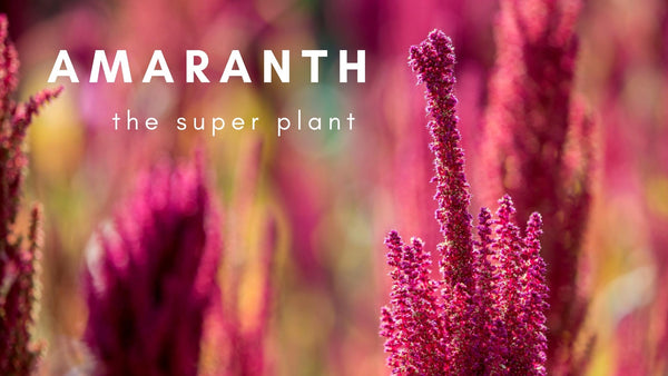 amaranth the super plant