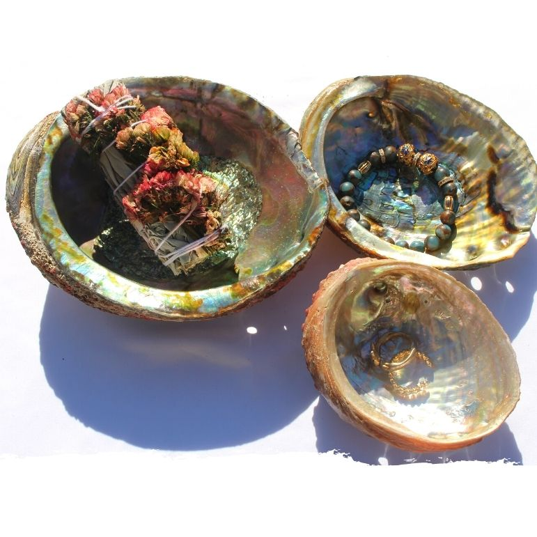 Mother of all Shells | Trinket/Smudge Dish