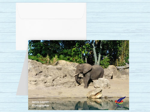 Elephant Note Cards