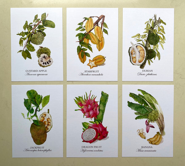 Fruits of Singapore Postcards