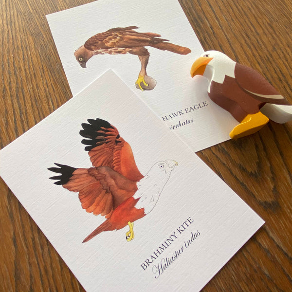 Birds of Singapore Postcards