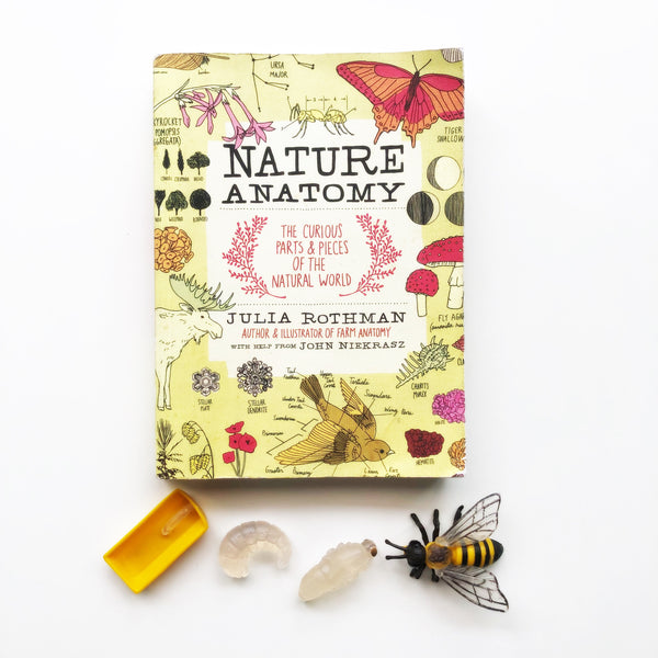 "*Pre-Order CLOSED* ""Nature Anatomy"" by Julia Rothman"