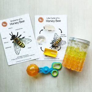 Honey Bee Life Cycle Learning Kit