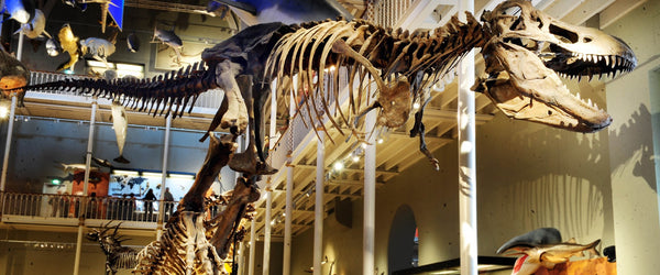 24 Places in the UK and Ireland where you and your kids can explore dinosaurs