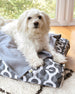 Biggs Dog Bed and Blanket Set