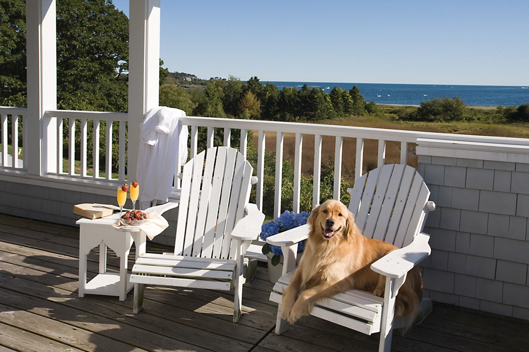 lovely best dog friendly furniture | How to Choose Pet Friendly Patio Furniture – Sunniland ...