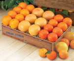 Bonus Box: Oranges, Ruby Red Grapefruit, & Tangerines or Tangelos