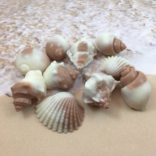 Shell Shaped Soap | 6 Shell Soaps | Shell Soap Set