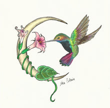 Crescent moon hummingbird at morning-glory  - Greeting Cards and Post Card - Nora Catherine