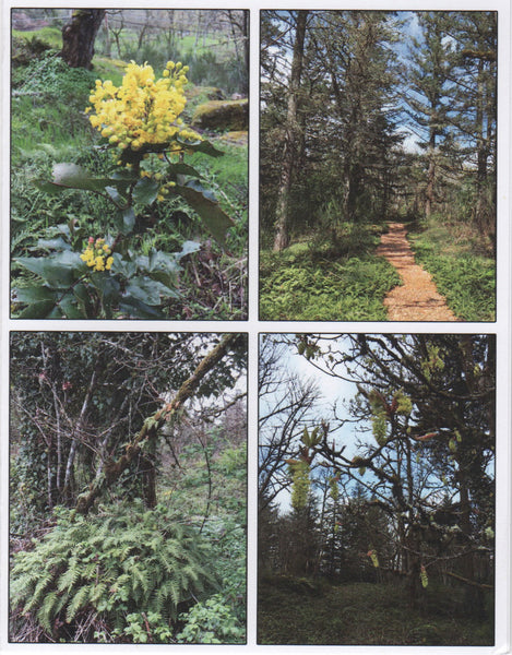 Gladstone Nature Park Greeting Cards