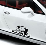 Car sticker bouledogue anglais - Bulldog&CoFolies