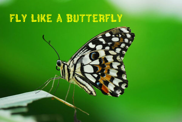 Fly Like A Butterfly!