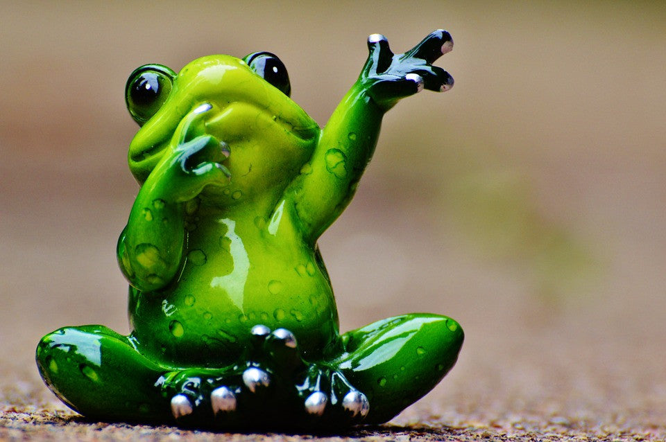 Frogs- Cute little creatures of great significance