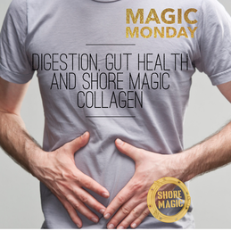 Digestion, Gut Health and Shore Magic Collagen